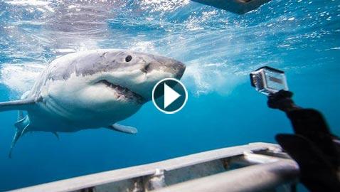 غواص شجاع ينقذ سمكة قرش حاولت عضه.. فيديو وصور