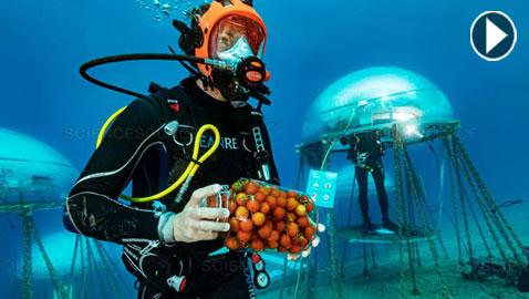 فيديو وصور.. حديقة لإنتاج الخضروات تحت الماء