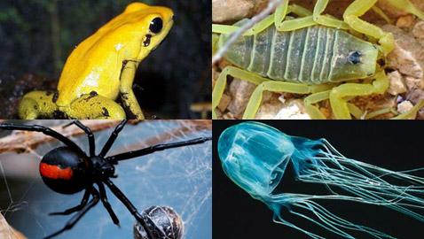صور حيوانات جميلة لكنها سامة وقاتلة