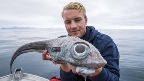بالصور: صياد نرويجي يصطاد سمكة (الديناصور) غريبة الشكل!