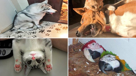 صور طريفة لتحول الحيوانات الأليفة إلى مثيري شغب