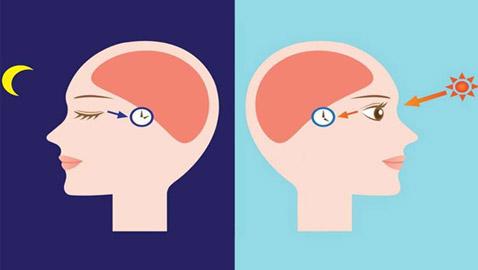 الساعة البيولوجية لجسم الإنسان، تعرفوا عليها قد تهمكم