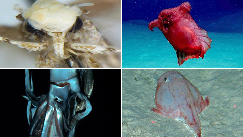 بالصور: كائنات غريبة واكتشافات مثيرة غيّرت فهمنا لمملكة الحيوان